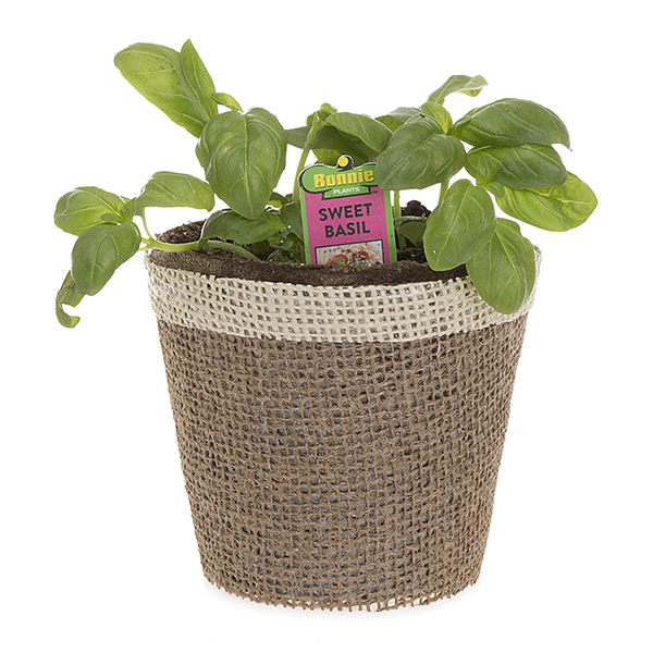 Jute Round Pot Holder Colored Rim with Plastic Liner Sm 4in