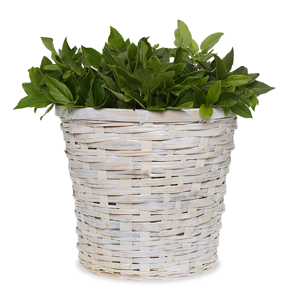 White Wash Planter Basket 9in