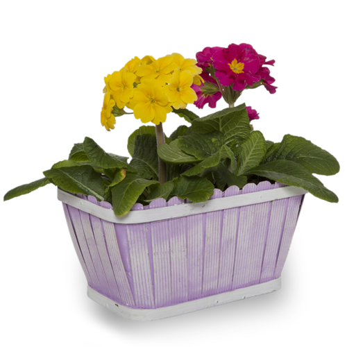 Springtime Rectangular Picket Fence Planter 8in