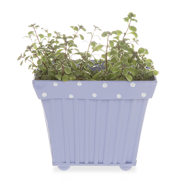 Square Fluted Metal with Polka Dot Rim - Lavender 6in