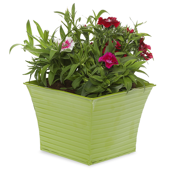 Ribbed Square Planter - Green 6in