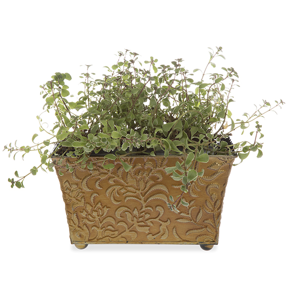 Xavier Large Vine Metal Container - Antique Gold 10in