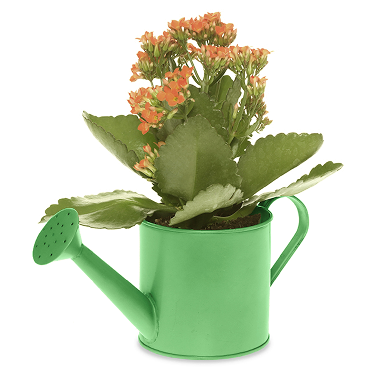 Small Round Watering Can - Green 4in